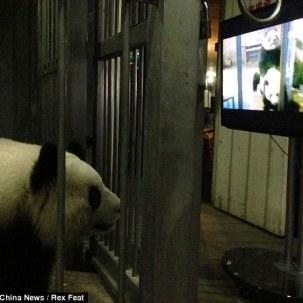 panda2 csc